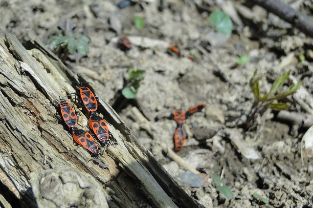 Steve Jackson – Expert Pest Control